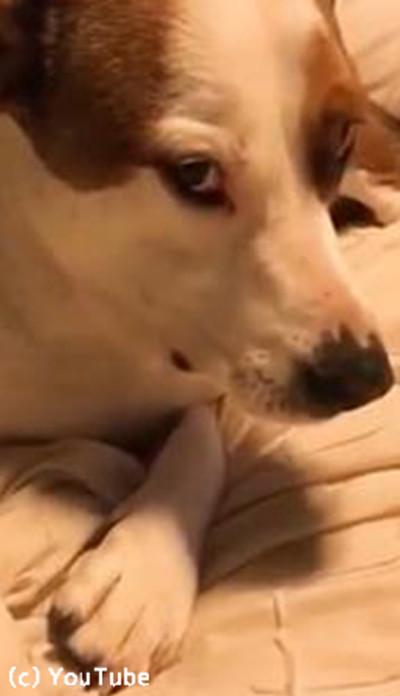 口の中に何かを隠す犬…音でバレバレ03