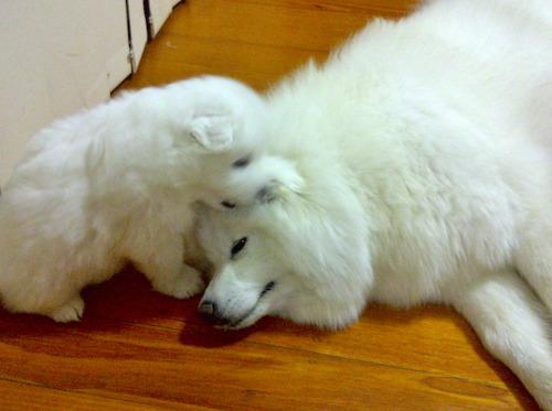 家族で就寝する犬04