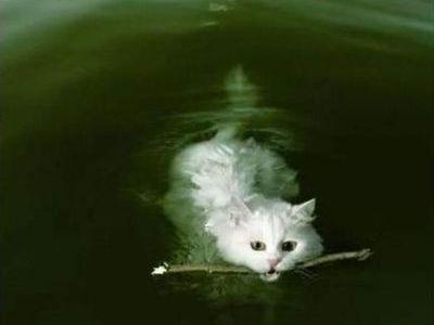 泳ぐ猫00
