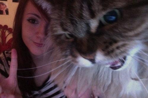 不機嫌な猫たち15