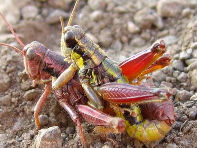 虫の交尾16