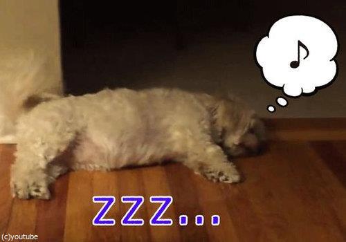 寝ながらしっぽを振る犬00