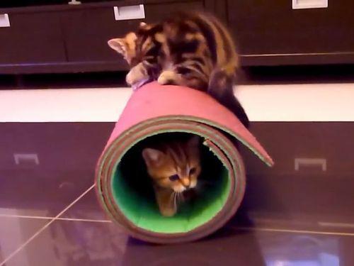 ヨガマットと子猫01