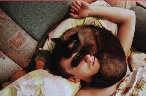 猫を飼った時の理想と現実06