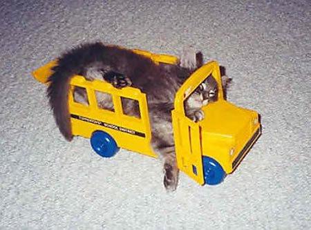 猫と乗り物11