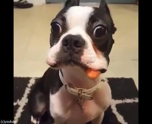 ニンジンを隠したかった犬02