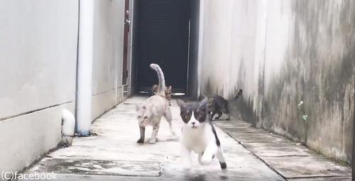 この猫の躍動感よ06
