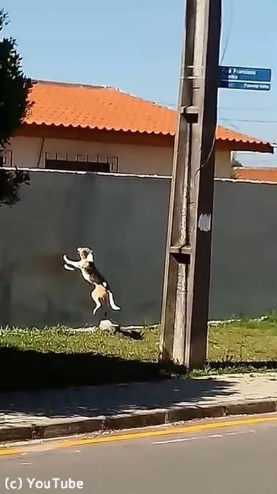 犬が壁越えジャンプにチャレンジ02