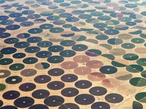 サウジアラビアの農場02