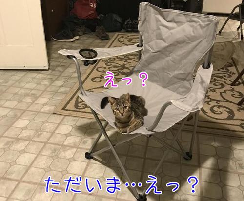 帰宅したら見知らぬ猫がいた00