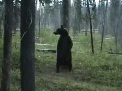 ポールダンス・クマ