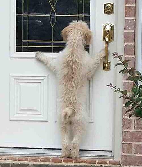 「うちの犬が家出した」02