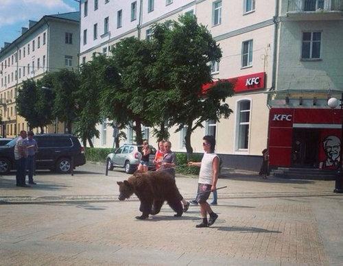ロシアのクマ07