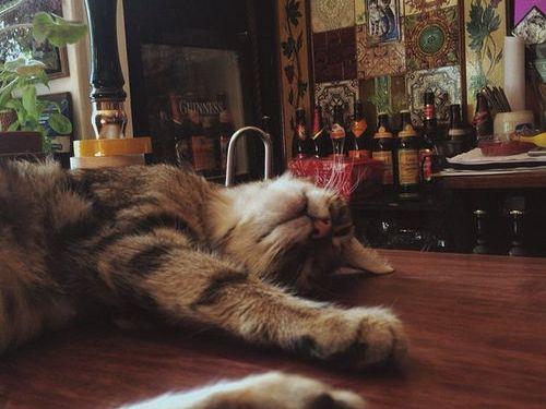 イギリスの猫パブ00