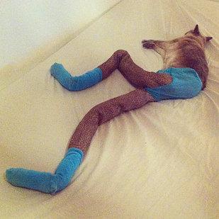足の長い猫グッチ05