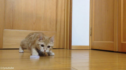猫ゴールキーパー01
