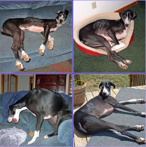 救助された犬や猫15