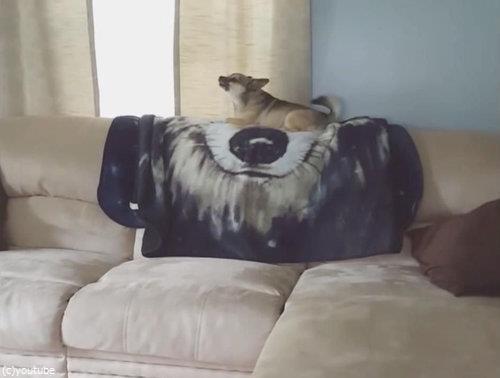 ソファの上の犬が消える01