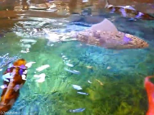 日本の魚ロボット04
