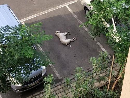 完璧に駐車する犬01