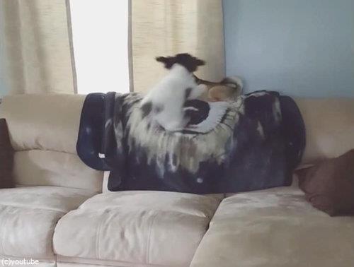 ソファの上の犬が消える04