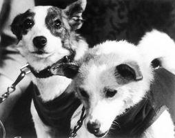 世界を変えた10匹の犬-ストレルカとベルカ