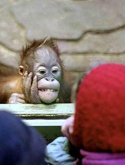 見ているやつを見かえす動物園の動物02