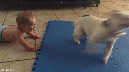 赤ちゃんをあやす犬02