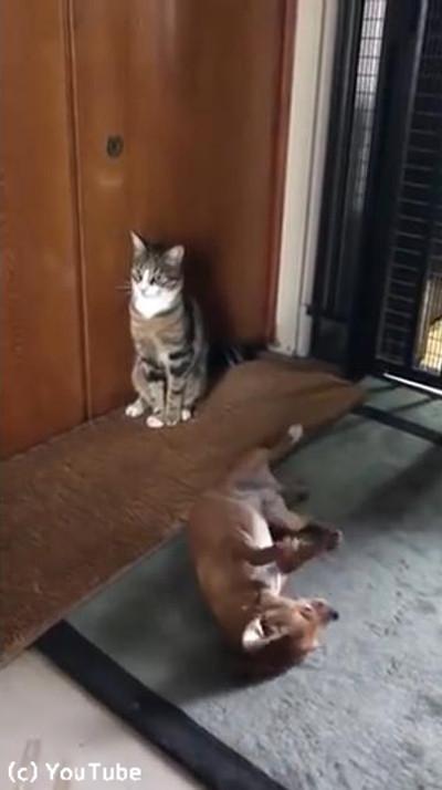 犬と猫のテンションの違い03