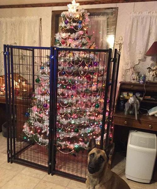 ペットからクリスマスツリーを守る戦い03
