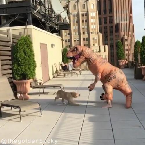 恐竜が犬に襲い掛かってきた!01