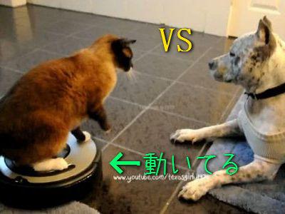 ルンバに乗って戦う猫