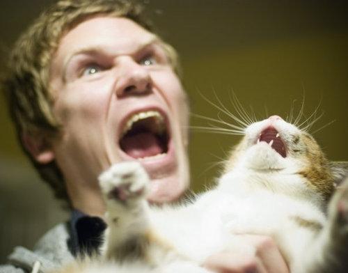 不機嫌な猫たち18