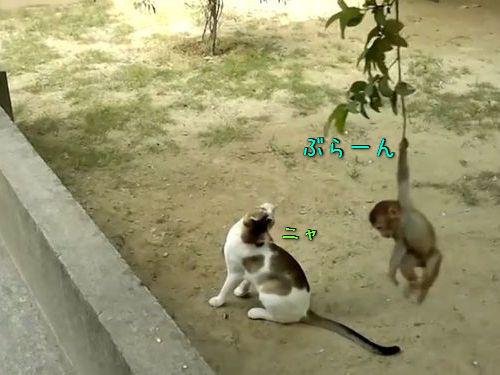 子ザルが枝にぶら下がって猫と戦う00