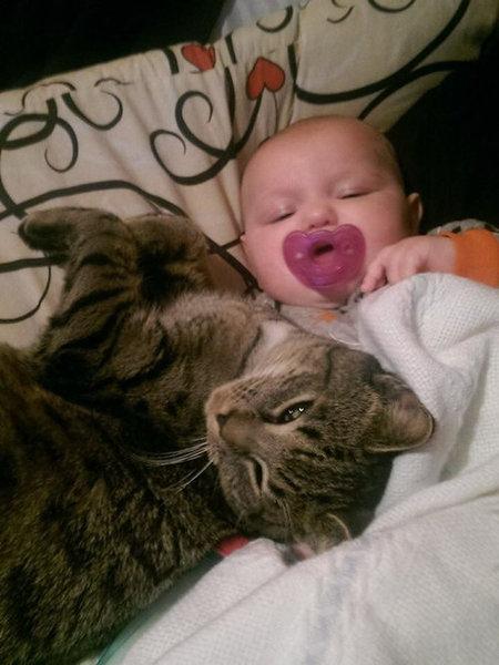 妊娠中に拾った猫が、今は赤ちゃんと親友に05