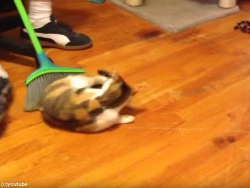 掃かれたい猫04