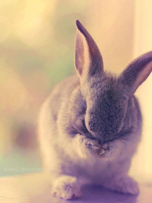 恥ずかしがるウサギ04