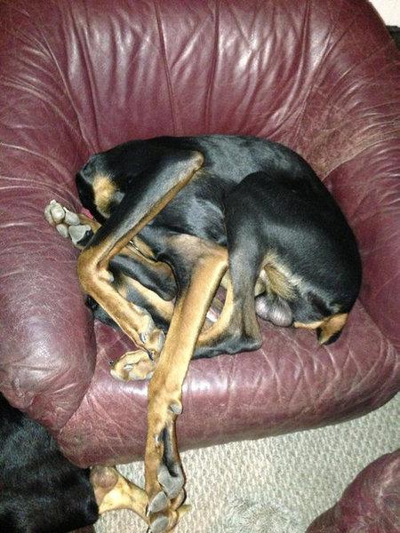 犬っぽくない犬13