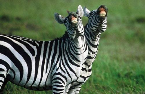 11スマイルや笑う動物