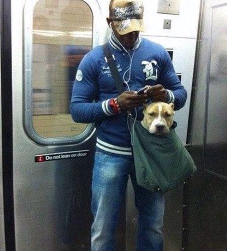 ニューヨークの地下鉄と犬01