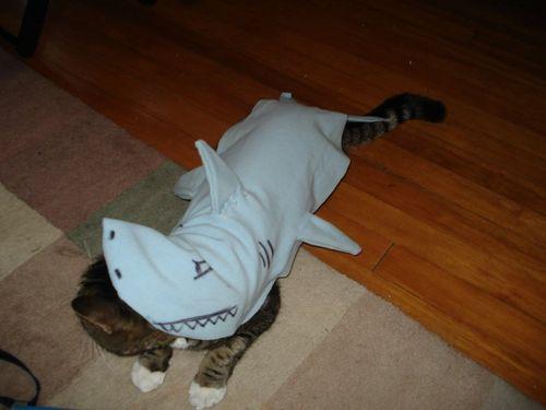 サメ猫09