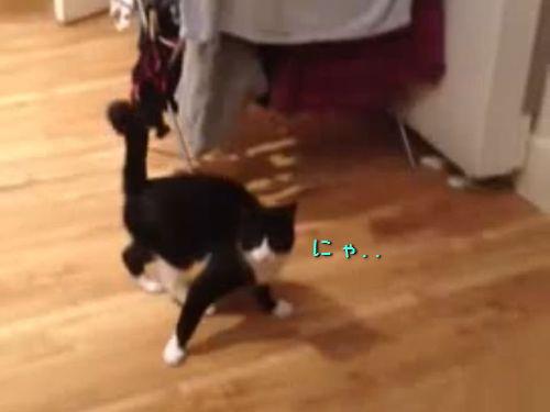 おかしな猫の動き00
