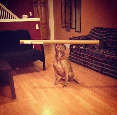 頭に載せる犬10