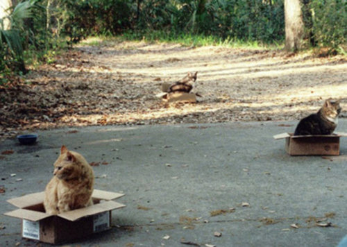 猫を無力化02