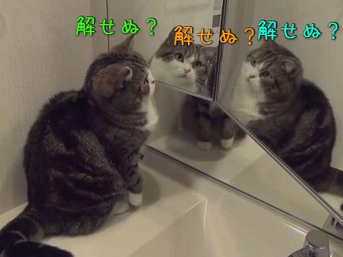 鏡と猫00
