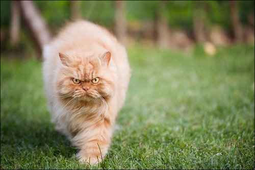 怒った猫02