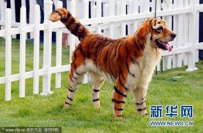 ペイント犬02
