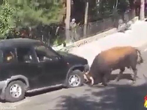 駐車と猛牛03
