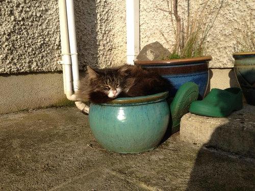 どこでも寝る猫たち11