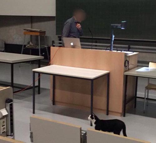 ドイツの大学で暮らす猫01